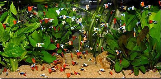 bể cá cảnh 7 màu đẹp