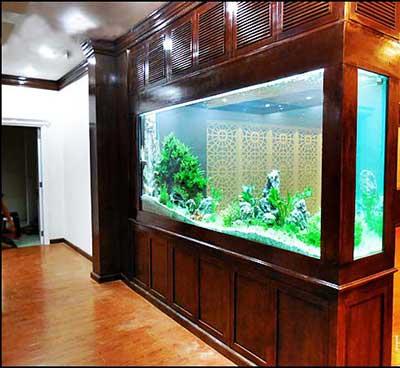 bể cá thủy sinh đẹp