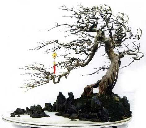 các thế bonsai bạt phong