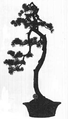 các thế bonsai tranh phong trác tập