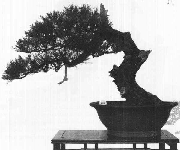 các thế bonsai diệu diệu dục hí