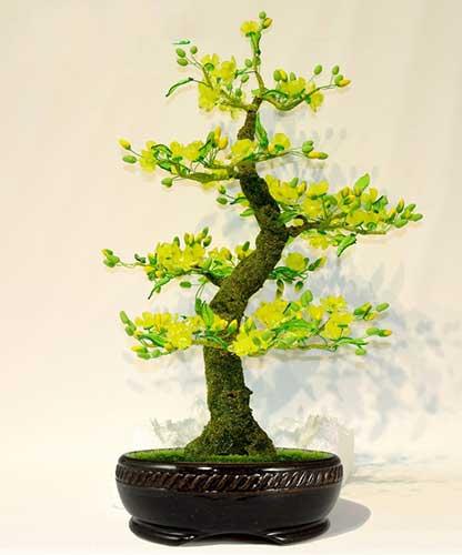 các thế bonsai mai nữ