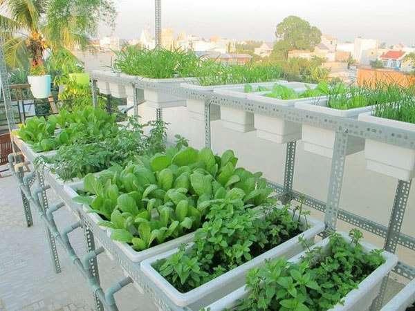trồng rau trong khay nhựa hiệu quả