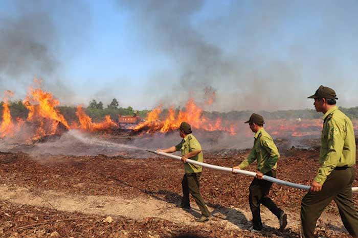 chữa cháy rừng