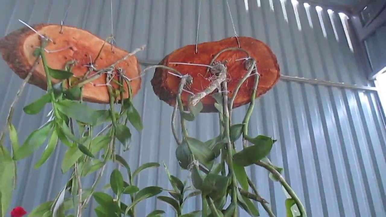 Thú nuôi, cây cảnh: Hướng dẫn trồng lan phi điệp ra hoa với các bước đơn giản Ghep-mat-go