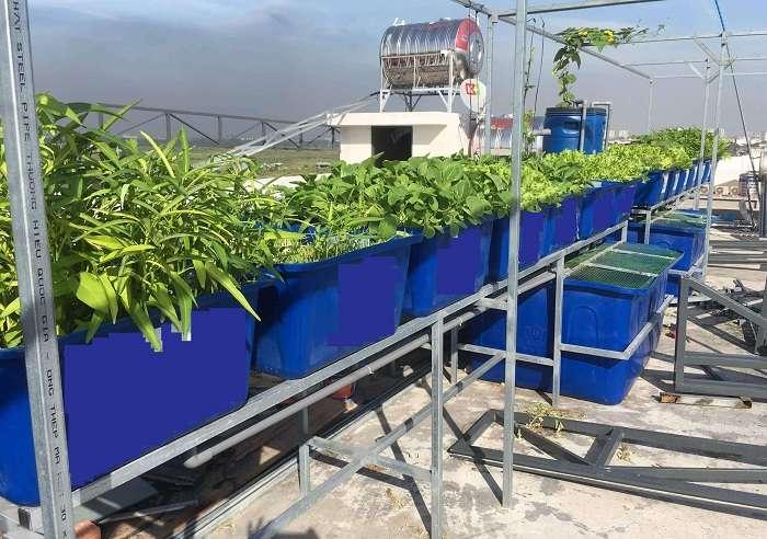 kĩ thuật trồng rau sạch trong khay nhựa