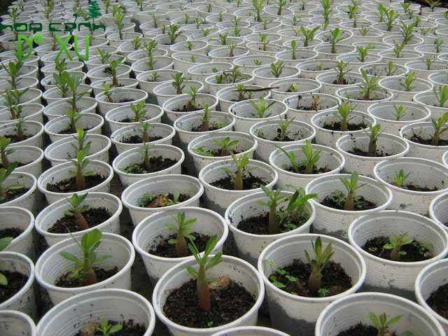 kinh doanh cây giống ít vốn