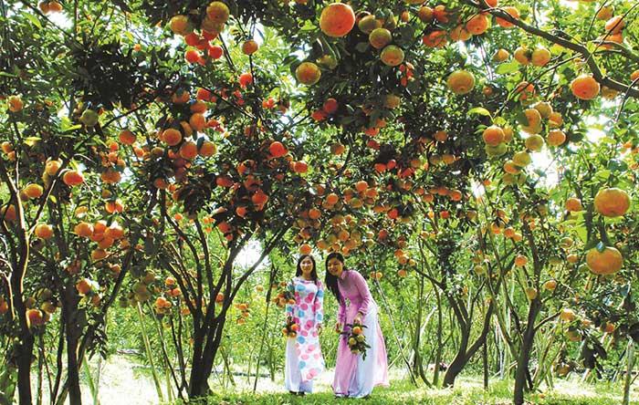kinh doanh ít vốn trái cây ở quê