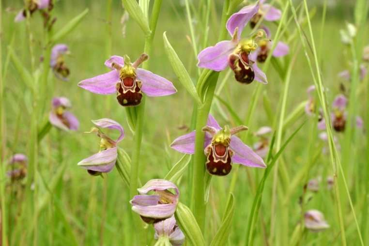 lan-hinh-con-ong