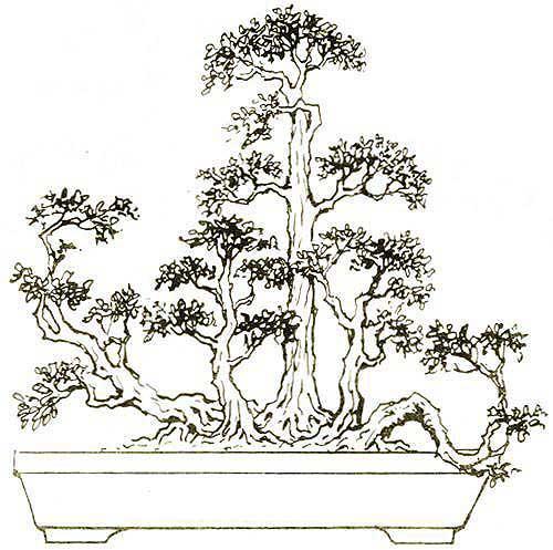 ngũ nhạc thế bonsai