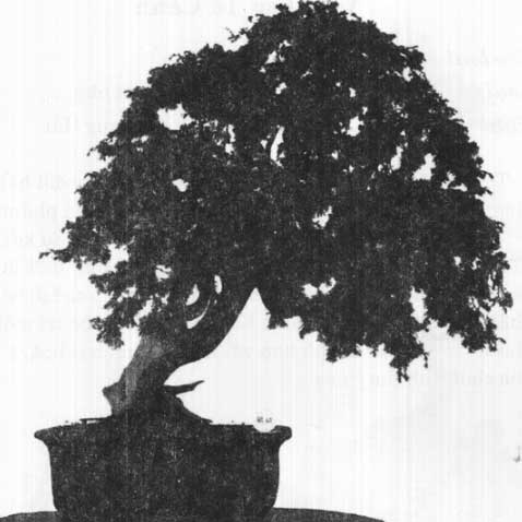 thế bonsai đẹp lục mạc