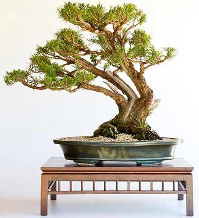 thế bonsai đẹp quần tụ tam sơn