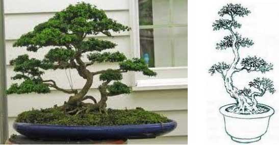 thế bonsai đẹp thế phụ tử mẫu tử