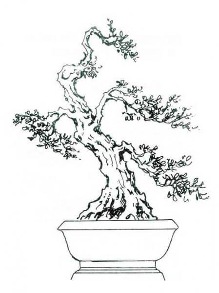 thế bonsai phượng vũ