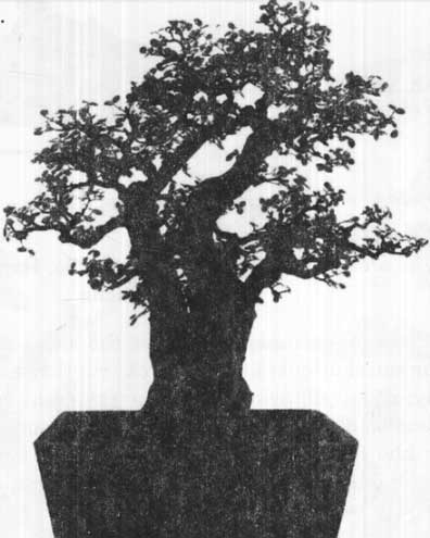 thế cây cảnh bonsai hồi quy