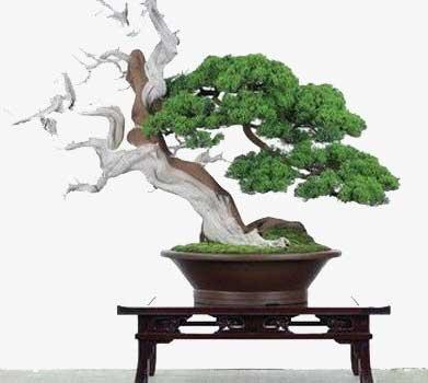 thế cây cảnh bonsai thoát tục