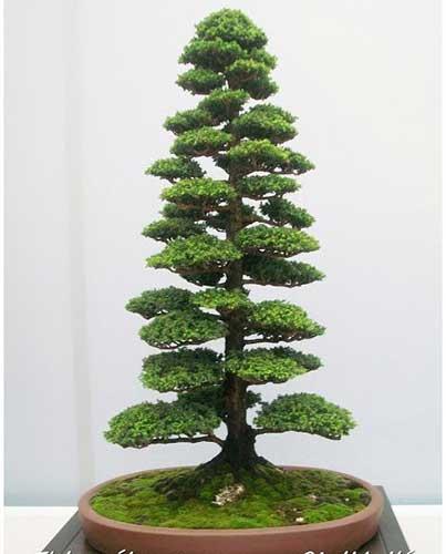 thế cây cảnh bonsai vũ trụ