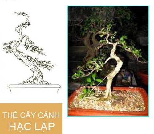 thế hạc lập bonsai đẹp