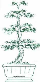 thế vương chữ tường bonsai đẹp