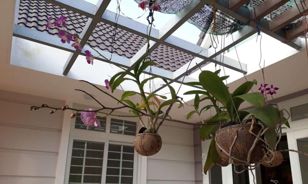 Thú nuôi, cây cảnh: Hướng dẫn trồng lan phi điệp ra hoa với các bước đơn giản Trong-lan-trong-qua-dua