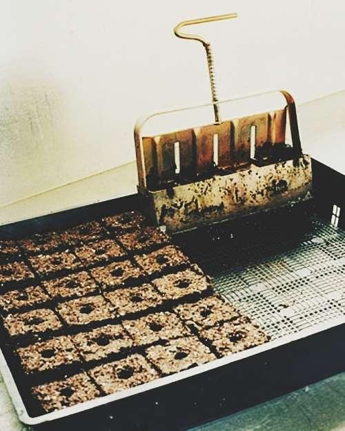 trồng rau trong khay nhựa