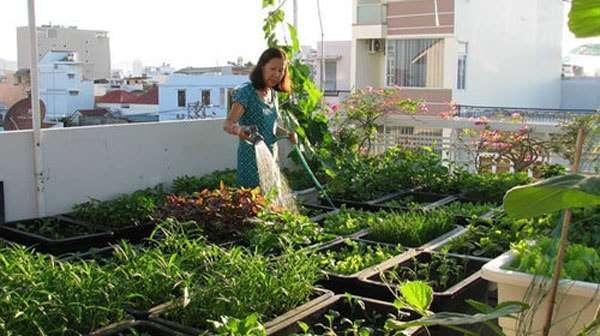 trồng rau sạch trong khay nhựa hiệu quả