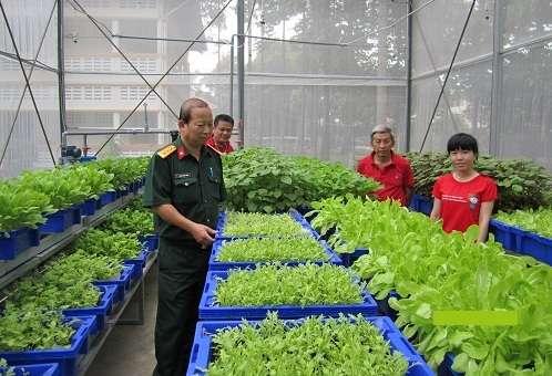 khay nhựa trồng rau sạch tại nhà